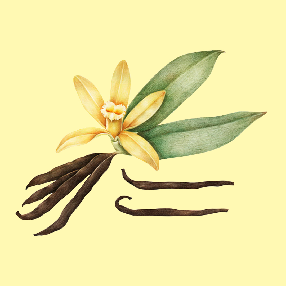 Vanilla - Base note